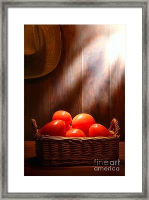 Tomatoes At An Old Farm Stand Framed Print by Olivier Le Queinec