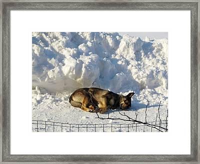Tommy Sleeping Framed Print by Ramona Matei