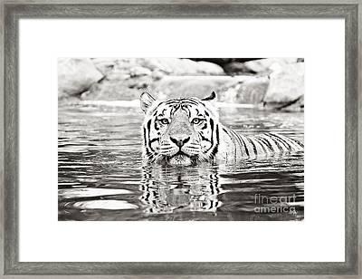 Top Cat Framed Print by Scott Pellegrin