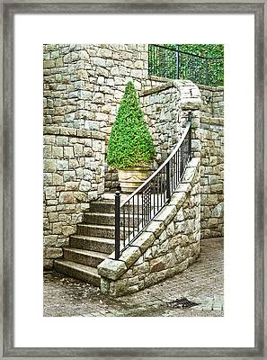 Topiary Plant Framed Print by Tom Gowanlock