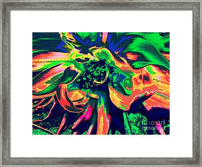 Tropicana Framed Print by Cindy McClung