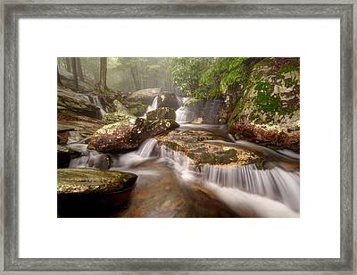 Topping The Panther Framed Print by Scott Moore