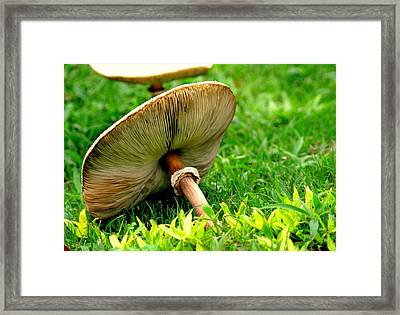 Toppled  Framed Print by Walter  Holland