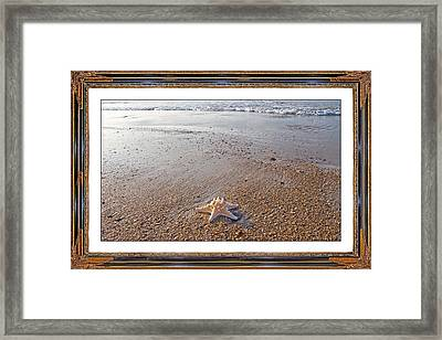 Topsail Island The Only One Framed Print by Betsy C Knapp