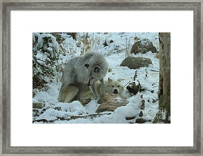 Total Submission Framed Print by Adam Jewell