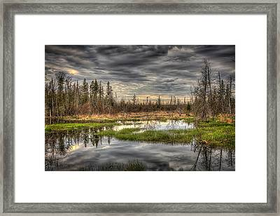 Touch Of Nature Framed Print by Gary Smith