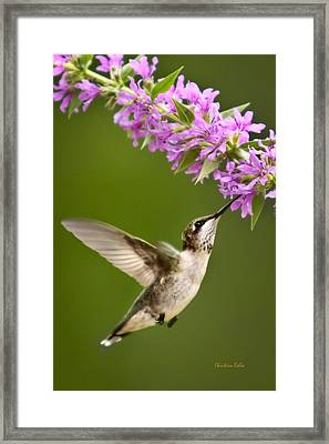 Touched Framed Print by Christina Rollo