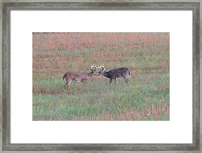 Touching Moment Framed Print by Dan Sproul