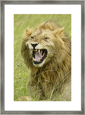 Tough Guy Framed Print by Michele Burgess