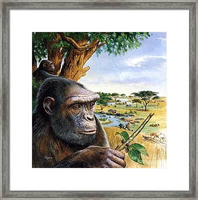Toumai Sahelanthropus Tchadensis Framed Print by Publiphoto