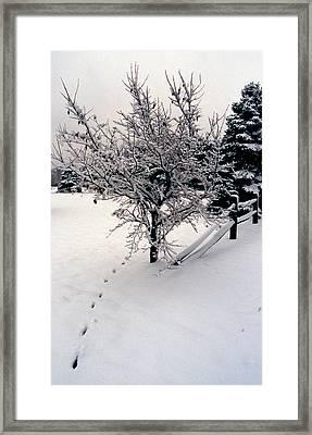 Tracks Framed Print by Skip Willits