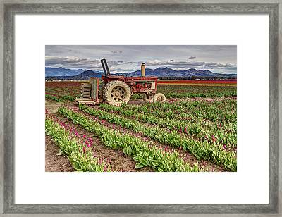 Tractor And Tulips Framed Print by Mark Kiver