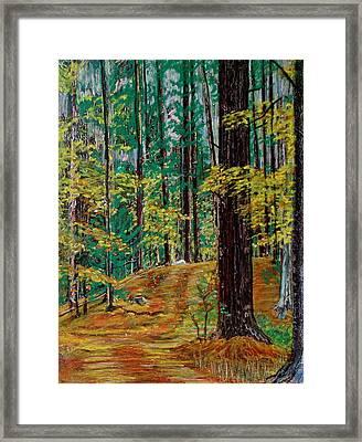 Trail At Wason Pond Framed Print by Sean Connolly