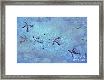 Trail Dance Framed Print by The Stone Age