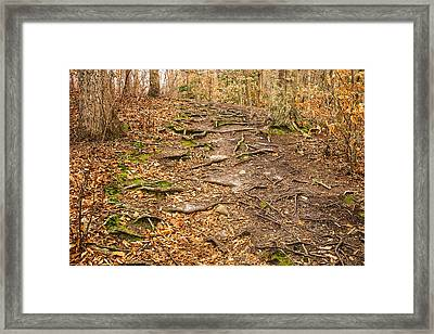 Trail In Ryder Conservation Land Framed Print by Frank Winters