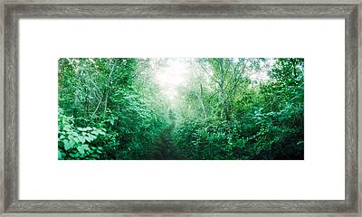 Trail Through The Woods Along Fort Framed Print by Panoramic Images