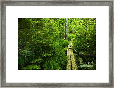 Trail Through The Woods Framed Print by Diane Diederich