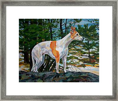 Trailblazer Framed Print by Derrick Higgins