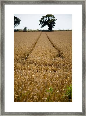Tramlines Framed Print by Paul Lilley