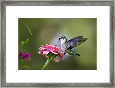 Tranquil Joy Framed Print by Christina Rollo