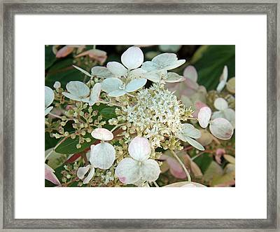 Tranquil Pastels Framed Print by Brenda Brown