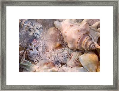 Tranquil Seashells Framed Print by Betsy C Knapp