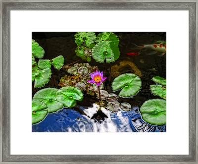 Tranquility - Lotus Flower Koi Pond By Sharon Cummings Framed Print by Sharon Cummings