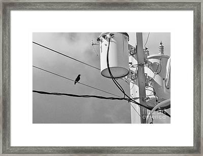 Transforming Framed Print by Lynda Dawson-Youngclaus