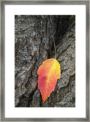 Transient Beauty - D008649 Framed Print by Daniel Dempster