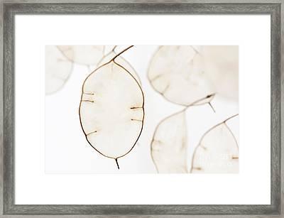 Translucent Framed Print by Anne Gilbert