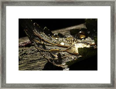 Transparencies Framed Print by Connie Handscomb