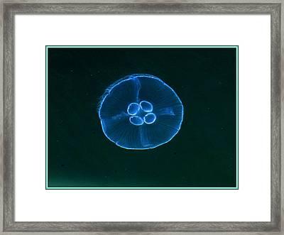 Transparency  In Blue Framed Print by David Kovac