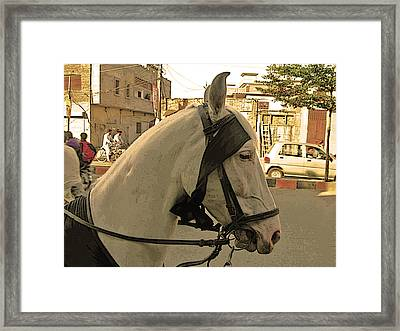 Transportation - Pakistan Framed Print by Lenore Senior and Bobby Dar