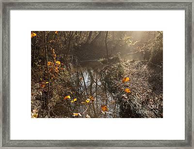 Travertine Creek In The Woods Framed Print by Iris Greenwell
