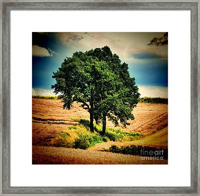Tree Alone Framed Print by Boon Mee