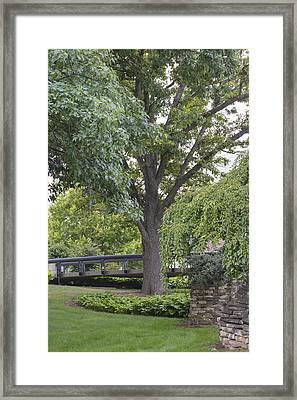 Tree And Bridge At Wharton Center Framed Print by John McGraw