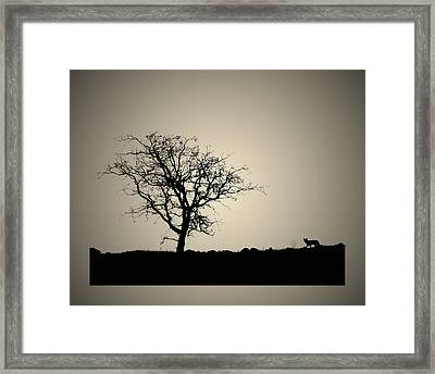Tree And Coyote Bonsai Framed Print by Robert Woodward