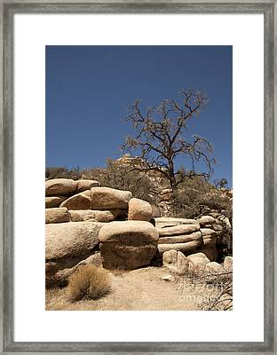 Tree At Joshua Tree Framed Print by Amanda Barcon