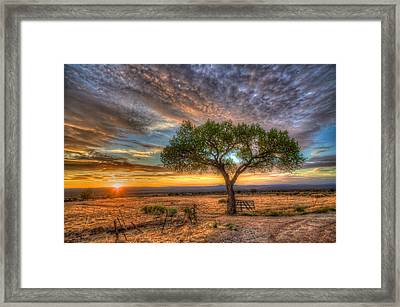 Tree At Sunset Framed Print by William Wetmore