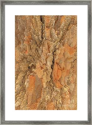 Tree Bark Abstract Framed Print by Cindy Lee Longhini