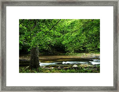 Tree By Cranberry River Framed Print by Thomas R Fletcher