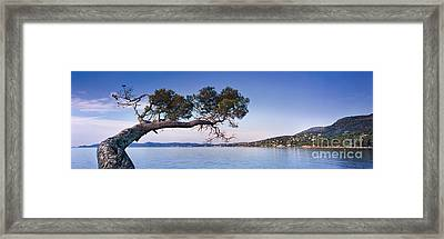 Tree By The Sea - Cote D'azur Framed Print by Rod McLean