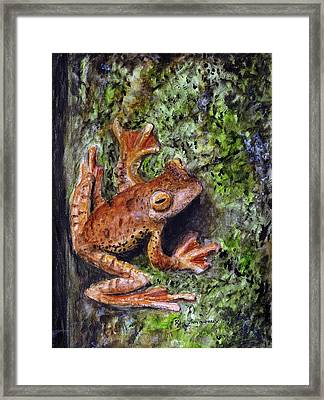 Tree Clinger Framed Print by Ryan Lamoureux