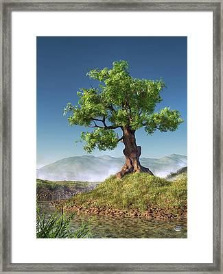 Tree Framed Print by Daniel Eskridge