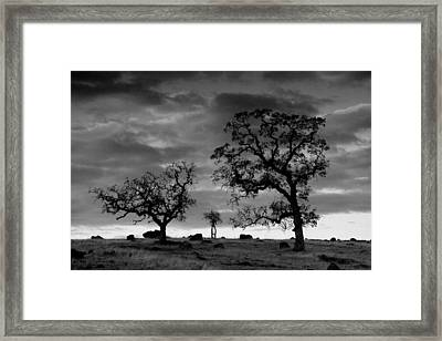 Tree Family In Black And White Framed Print by Robert Woodward