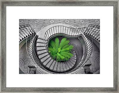 Tree Fern In The Stairs Framed Print by Daniel Furon