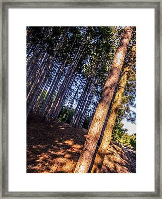 Tree Field Framed Print by Dawdy Imagery