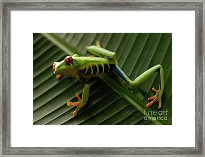 Tree Frog 16 Framed Print by Bob Christopher