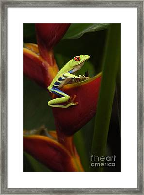 Tree Frog 3 Framed Print by Bob Christopher