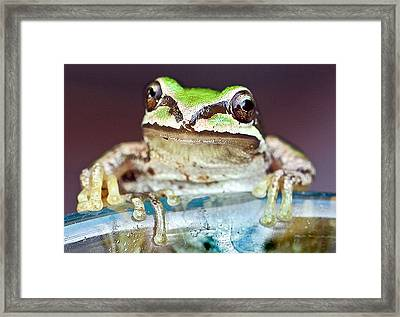 Tree Frog Framed Print by Jean Noren